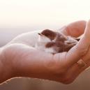 5 vlastností, které nesmí chybět žádnému kvalitnímu manažerovi - StrengthInVulnerability-bird
