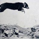Zvířata a válka. 14 fotografií zachycující obvyklé i neobvyklé způsoby využití zvířat v armádě - trench-dog