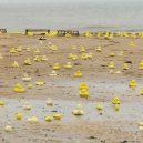 Slavná havárie: gumové kachničky zaplavily Tichý oceán - vystrizek_1
