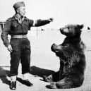 Zvířata a válka. 14 fotografií zachycující obvyklé i neobvyklé způsoby využití zvířat v armádě - wojtek-bear