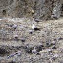 Tajemný ostrov v Pacifiku může vědcům prozradit, jak v minulosti sopečná činnost ovlivňovala vodu na Marsu - 9385996-6666805-image-a-35_1549312003538