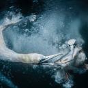 10 vítězných snímků z prestižní soutěže Sony World Photography Awards 2019 - Screenshot 2019-02-28 at 11.29.20
