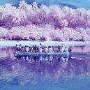 Fotografka zachytila život na ostrově pohledem barvoslepých domorodců - The-Island-Of-The-Colour-Blind