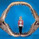 Největší žralok mohl dosahovat délky až 30 metrů! - woman-megalodon-jaws