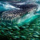 10 nejlepších snímků velké instagramové soutěže pořádané National Geographic - BuF_nkqFk8M-png__700