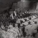Jak jdou dohromady sušenky a Trůny? Podívejte se… - game-of-thrones-oreo-title-sequence-6-5ca5f2c377689__700