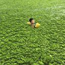 Peklo na zemi. Takhle vypadá život v znečištěné Číně - boy-swimming-in-algal-blooms
