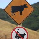Nejpodivnější cedule a zákazy, které můžete po světě najít - Funny-Signs-Cow-35