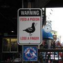 Nejpodivnější cedule a zákazy, které můžete po světě najít - Funny-Signs-Pigeon-4