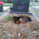 Věrnost až za hrob v podání našich čtyřnohých miláčků - 57750926_1991270597645409_137999871905890304_n