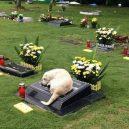 Věrnost až za hrob v podání našich čtyřnohých miláčků - 57935930_1991270477645421_88252833379385344_n
