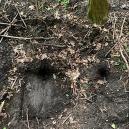 Jantarová komnata se možná ukrývá v polském podzemním tunelu - Snímek obrazovky 2019-06-16 v17.14.20