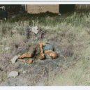 Oživlá kriminální historie – podívejte se, jak se vraždilo v minulém století - irving-feinstein-burned-body