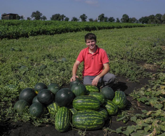 Melouny se ostatně pěstují v Polabí i dnes, jak ukazuje (a dokazuje) hrdý pěstitel z rodinné farmy Jamboz (farmarivpraze.cz)
