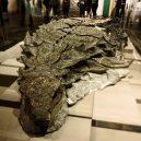 Dinosauří fosilie vypadá jako živá - 67307648_940847516261297_7734292292685034616_n