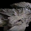 Dinosauří fosilie vypadá jako živá - Armoured Creature Nodosaur  (1)
