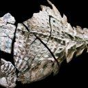 Dinosauří fosilie vypadá jako živá - Dino-Fossil-color-intact