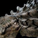 Dinosauří fosilie vypadá jako živá - nodosaur-fossil-canadian-mine-face