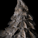 Dinosauří fosilie vypadá jako živá - nodosaur-spikes