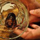 The Sourtoe Cocktail – nápoj, který rozhodně není pro vybíravé - Sourtoe-Cocktail_Independent-News-Today