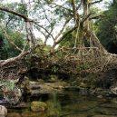 Pohádkové mosty z kořenů stromů jsou staré stovky let - 1_v_7zN3NLnSR12sO-Gv-yjw