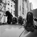 New York 40. let očima teenagera Stanleyho Kubricka - 59ad111282a0b-vintage-photographs-new-york-street-life-stanley-kubrick-8-59a94581034c2__700