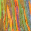 Blahovičník duhový – nejbarevnější strom na světě - 75246639_3168450846509238_2851019378646843392_o