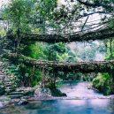 Pohádkové mosty z kořenů stromů jsou staré stovky let - Double-Decker-Living-Root-Bridges-of-Meghalaya