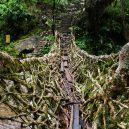 Pohádkové mosty z kořenů stromů jsou staré stovky let - DSC01469