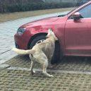 Psi se surovému řidiči pomstili - ga4