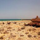 Stopy, které zanechala studená válka, chátrají v každém koutu světa - http___cdn.cnn.com_cnnnext_dam_assets_191031123053-t-3485-medium-tank-socotra-island-yemen
