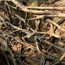 Pohádkové mosty z kořenů stromů jsou staré stovky let - http___cdn.cnn.com_cnnnext_dam_assets_191119111824-04-living-bridges-india