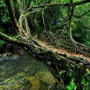 Pohádkové mosty z kořenů stromů jsou staré stovky let - Living-root-bridge-6
