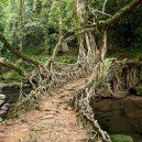Pohádkové mosty z kořenů stromů jsou staré stovky let - living root bridge tree india Meghalaya 10