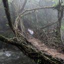 Pohádkové mosty z kořenů stromů jsou staré stovky let - school-boys-living-root-bridge-meghalaya-india