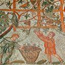 Římská láhev ze Špýru stále uchovává tekutý nápoj - Vendanges_romaines_à_Cherchell