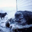 Nejchladnější vesnice světa – sibiřský Ojmjakon - coldest-city-sleeping-dog