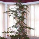 8 nejhnusnějších vánočních stromků na světě - facebook j
