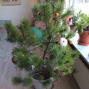 8 nejhnusnějších vánočních stromků na světě - FB