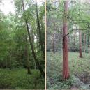Žijící fosílie a stáda muflonů. Takhle to dnes vypadá v pražském Kunratickém lese - Screenshot 2019-12-18 at 13.54.17