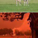 Austrálie před a po. Vlna požárů zdevastovala značnou část ostrovního kontinentu - australia-bushfires-before-after-photos-22-5e159968b2b49__700