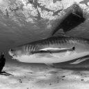 """""""Záhada žraločí ruky"""" otřásla roku 1935 Austrálií - 7fb305_2769b027163d4b79a6e589dc2970859c"""