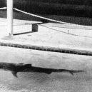 """""""Záhada žraločí ruky"""" otřásla roku 1935 Austrálií - c9ec818d7afcd812b619e5d4eefb81a2"""