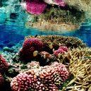 Palmyra – ukrývá krásný atol pirátský poklad? - Coral_reef_at_palmyra