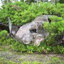 Palmyra – ukrývá krásný atol pirátský poklad? - N163R-1