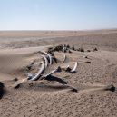 Africké pobřeží s tisíci vraky a nespočtem koster - 29mag-skeleton-05-master675