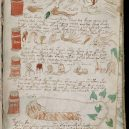 Kdo a proč sepsal tzv. Voynichův rukopis? Středověkou záhadu zatím nedokáže rozlousknout ani umělá inteligence - 800px-Voynich_Manuscript_(175)