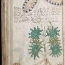 Kdo a proč sepsal tzv. Voynichův rukopis? Středověkou záhadu zatím nedokáže rozlousknout ani umělá inteligence - 800px-Voynich_Manuscript_(66)