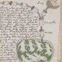 Kdo a proč sepsal tzv. Voynichův rukopis? Středověkou záhadu zatím nedokáže rozlousknout ani umělá inteligence - Voynich_manuscript_bathtub2_example_78r_cropped