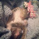 Pár poskytl domov opuštěnému mláděti veverky, to se zotavilo a stalo se členem rodiny - 60312